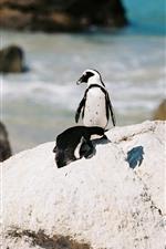 Preview iPhone wallpaper Penguin, sea, rocks