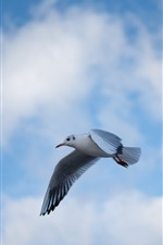 Preview iPhone wallpaper Pigeon flight, blue sky, clouds, bird