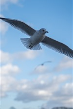 Preview iPhone wallpaper Pigeon flight, sky, clouds