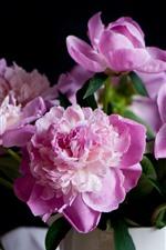 Preview iPhone wallpaper Pink peonies, flowers, vase, water droplets, hazy