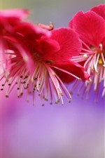 Preview iPhone wallpaper Pink plum flowers, spring