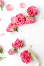 Preview iPhone wallpaper Pink roses, white background