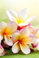 Preview iPhone wallpaper Plumeria, hazy background