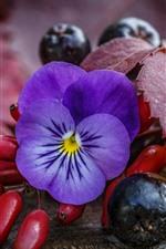Preview iPhone wallpaper Purple flower, berries