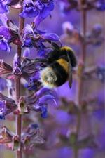 미리보기 iPhone 배경 화면 자주색 꽃, 줄기, 벌, 곤충