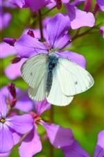 Flores roxas, borboleta branca