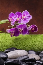 Preview iPhone wallpaper Purple phalaenopsis, stones, candle, steam