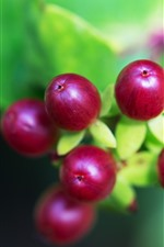 Preview iPhone wallpaper Red berries close-up, green background