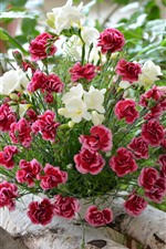 Preview iPhone wallpaper Red carnation and white flowers, bouquet