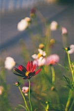 Preview iPhone wallpaper Red flowers, hazy background