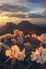 Preview iPhone wallpaper Rhododendron, mountains, sunrise, morning