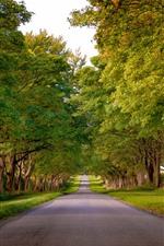 Camino, arboles, verde, verano
