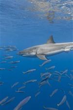 Animales marinos, tiburones, peces, bajo el agua