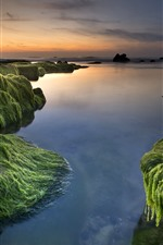 Preview iPhone wallpaper Sea, coast, moss, water, sunset