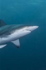 Tiburón y pequeños tiburones