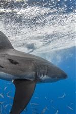 Tiburón, pez, mar, bajo el agua, salpicaduras de agua.