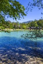 Eslovénia, jasna, lago, árvores, casa