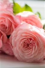 Algunas rosas rosadas, pétalos, gotas de agua, brujería