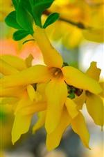 Primavera, flores amarelas, nebuloso