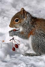 Preview iPhone wallpaper Squirrel eat berries, snow, winter
