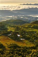 Switzerland, montanhas, árvores, campo, névoa, manhã