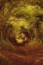 Árboles, canal, camino, otoño.