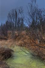 Árboles, hierba, charco, otoño