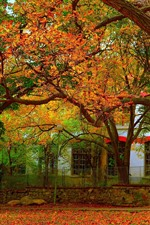 Preview iPhone wallpaper Trees, leaves, autumn, house