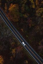 Árvores, estrada, carro, vista de cima