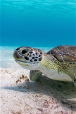 Preview iPhone wallpaper Turtle, underwater, sea