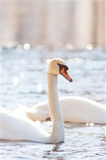 Preview iPhone wallpaper Two white swans, pond, shine, glare