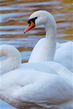 Preview iPhone wallpaper Two white swans, water