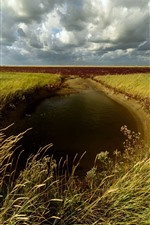 Preview iPhone wallpaper Wheat fields, puddle, clouds