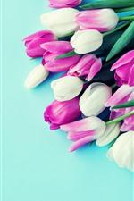 iPhone fondos de pantalla Tulipanes blancos y rosados, fondo azul