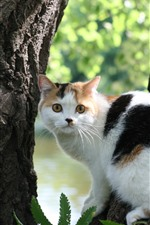 Preview iPhone wallpaper White cat look back, tree
