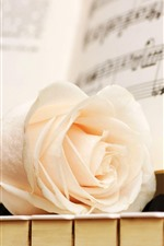 Preview iPhone wallpaper White rose, piano keys, music score