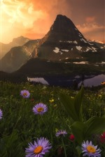 Wildflowers, mountains, goat, sunrise, clouds