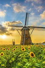 Preview iPhone wallpaper Windmill, sunflowers, sunset, clouds