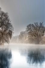Invierno, río, árboles, niebla, mañana