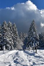 Invierno, nieve espesa, valla, árboles, frío