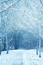 Invierno, arboles, nieve, parque, camino.