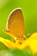 Flor amarela, borboleta, fundo verde