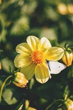 Flores amarelas, borboleta, primavera