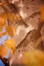 Gelbe Blätter, Baum, dunstig