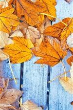 Folhas de bordo amarelo, placa de madeira