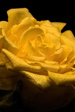 Preview iPhone wallpaper Yellow rose close-up, petals, black background