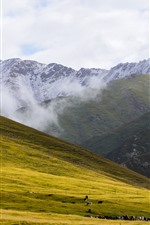 Preview iPhone wallpaper Animaqing Snow Mountain, meadow, clouds, fog, grazing, China