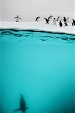 Preview iPhone wallpaper Antarctic, penguins, underwater, snow