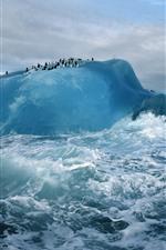 Ártico, icebergs, pinguim, mar, ondas