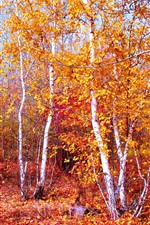 Preview iPhone wallpaper Autumn, trees, yellow and red leaves
